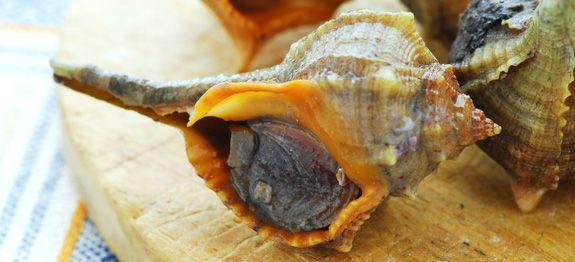 Come cucinare garusoli o murice
