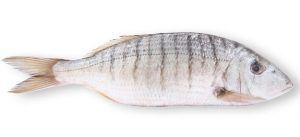 Come cucinare pesce mormora