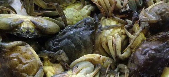 come cucinare le moleche